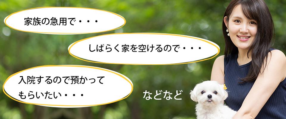 sitsuke